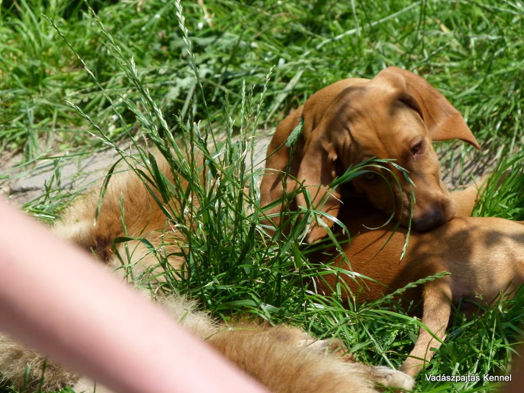 2012-06-30-litter-csillag-x-villam-15