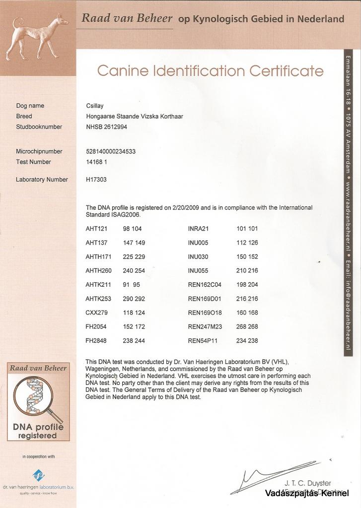 csillag-canine-identification-certificate
