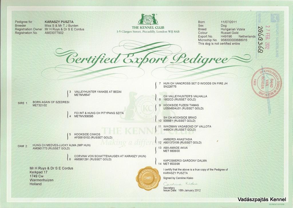 karaszy-puszta-certified-export-pedigree-nl-reg