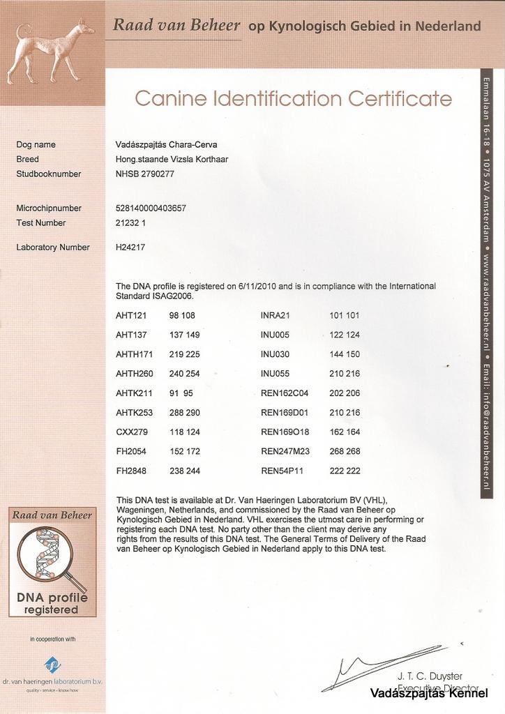 vadaszpajtas-chara-cerva-layka-canine-identification-certificate