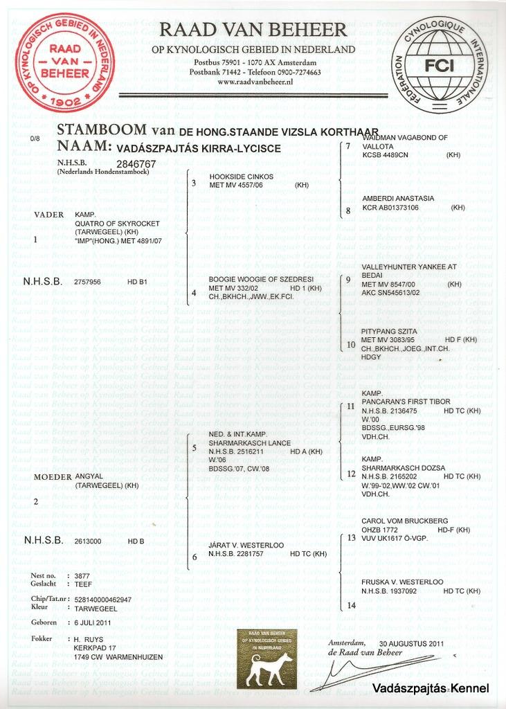 vadaszpajtas-kirra-lycisce-pedigree